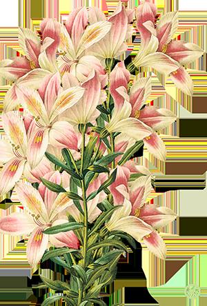Flores Madrid